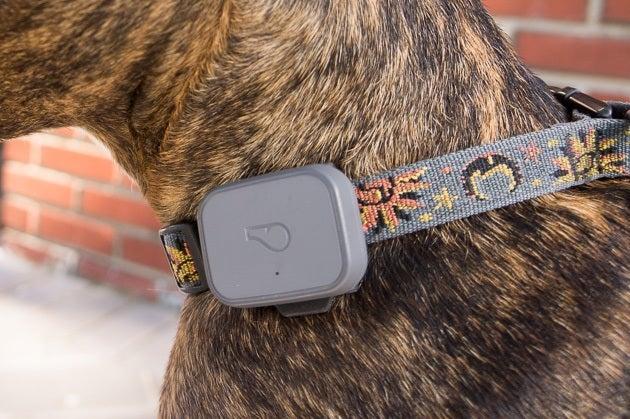 Buy Gps Pet Tracking Device Online in Australia